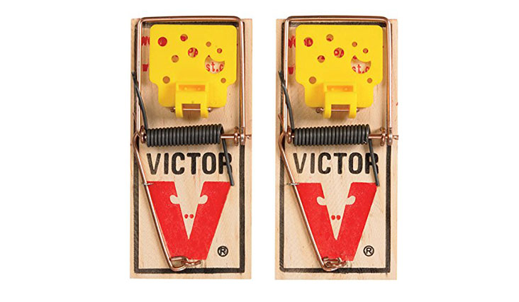 Victor EZ set mouse trap (Pack of 12)